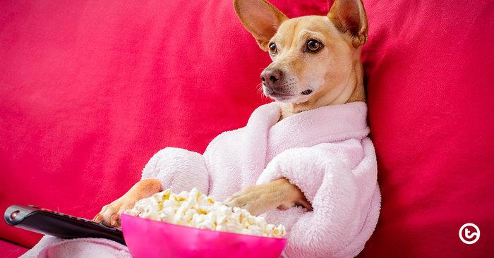 Teachers: The Best Netflix Series to Binge (Holiday Edition)